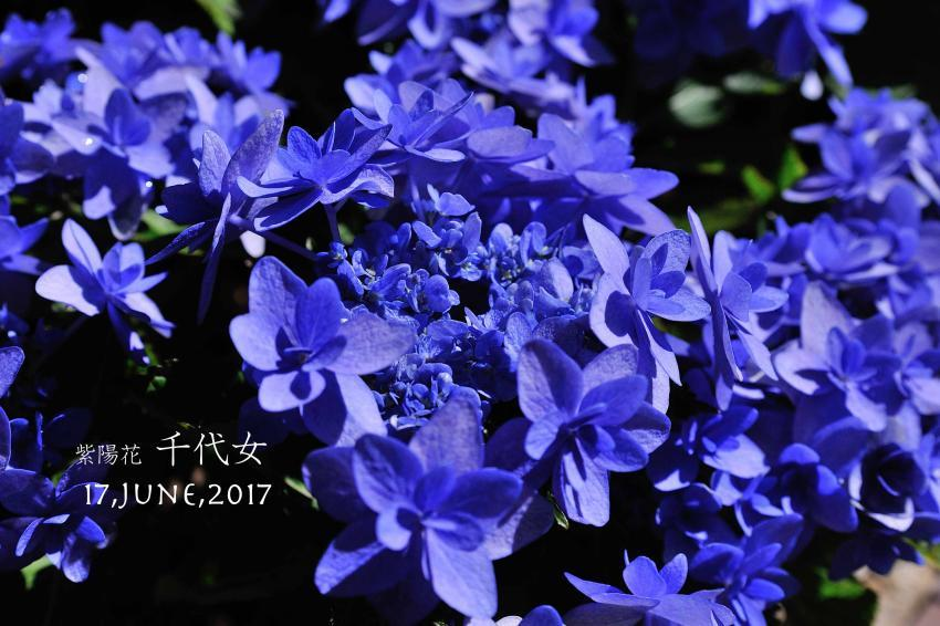 DSC_3500-L_convert_20170620113913.jpg