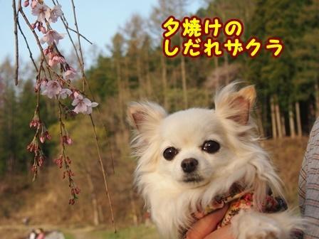 blog9488a.jpg