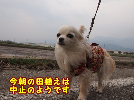 blog9498a.jpg