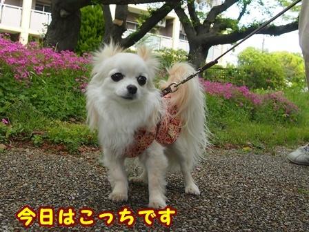 blog9515a.jpg