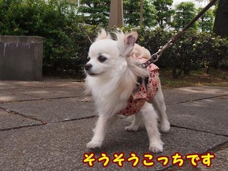 blog9518a.jpg