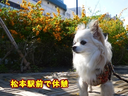 blog9575a.jpg