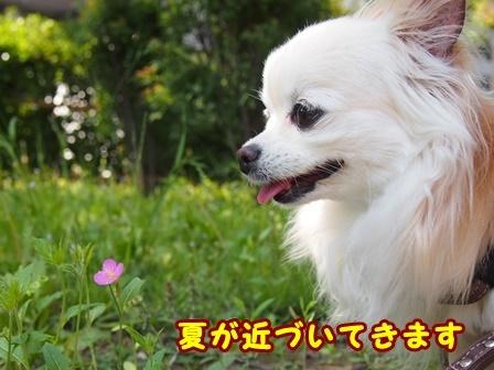 blog9625a.jpg