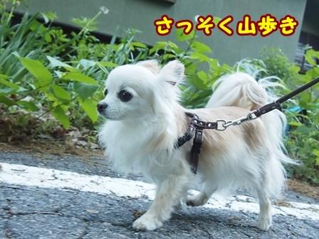 blog9633a.jpg