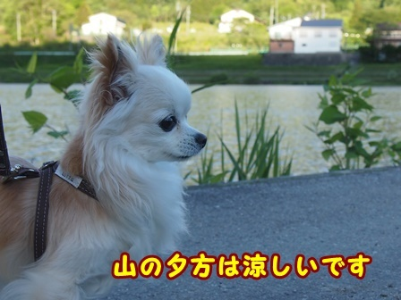 blog9642a.jpg