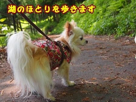 blog9654a.jpg