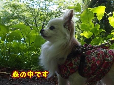 blog9655a.jpg