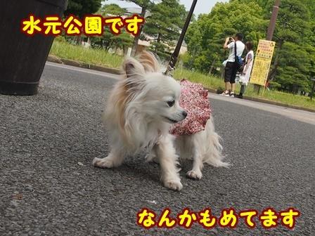 blog9693a.jpg