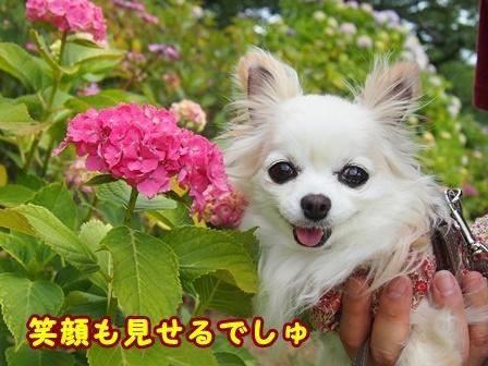 blog9700a.jpg
