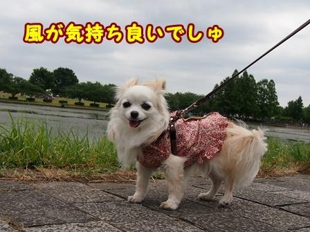 blog9708a.jpg