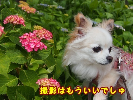 blog9709a.jpg