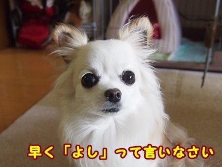 blog9730a.jpg