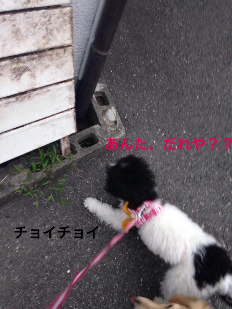 fc2blog_20170709235723eab.jpg