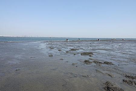 2017潮干狩り5