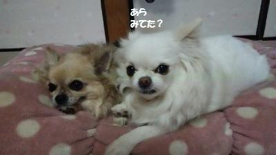 DSC_0914_convert_20170427164830.jpg