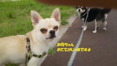 DSC_0968_convert_20170626104111.jpg