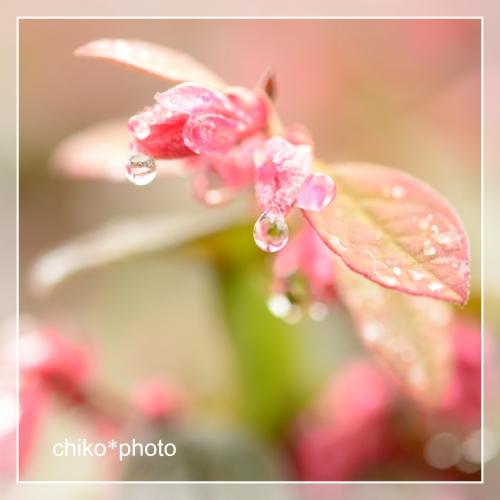 photo-705 雨上がり1_2