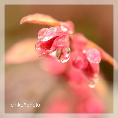 photo-705 雨あがり1_1