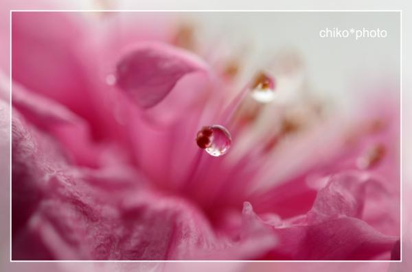 photo-706 雨あがり2_1