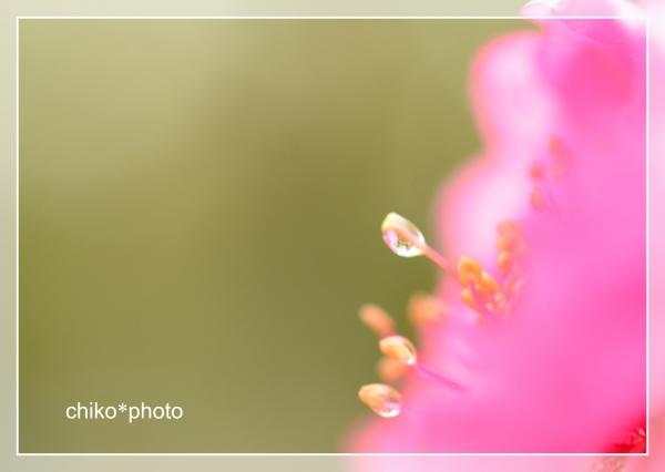 photo-706 雨あがり2_2