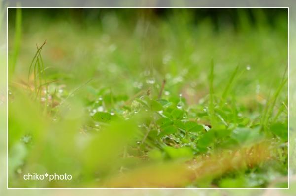 photo-707 雨あがり3_1