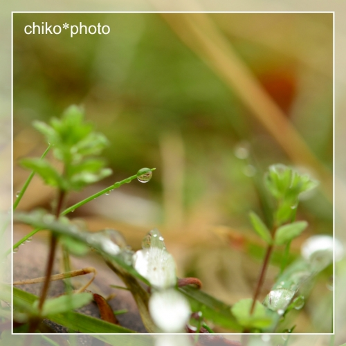 photo-707 雨あがり3_2