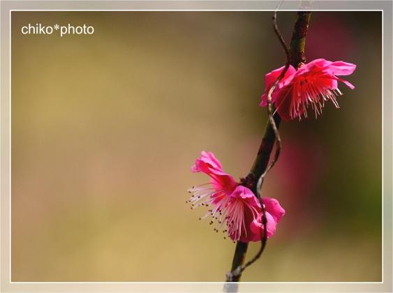 photo-709_3.jpg