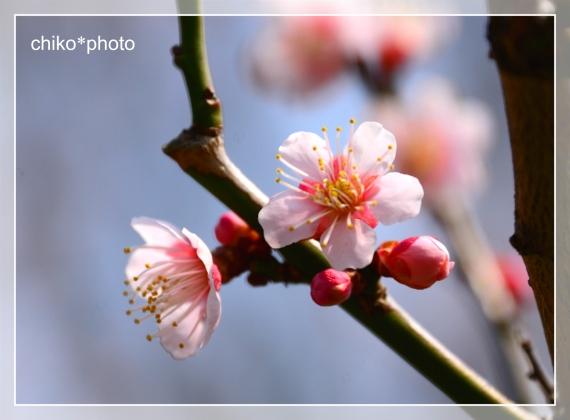 photo-710_2.jpg
