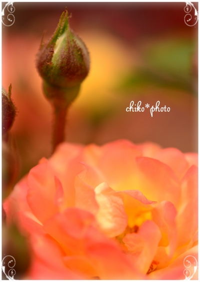 photo-711_1.jpg