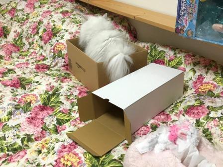 マリーと箱 (1)