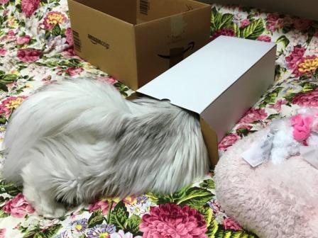 マリーと箱 (2)