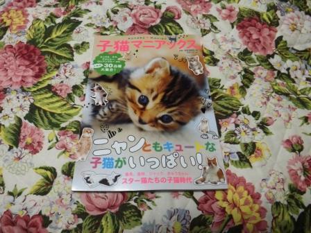 子猫マニアックス (2)