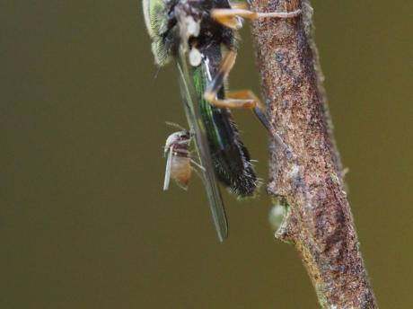 スズメバチ巣2