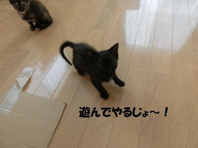 サイちゃん合宿0602 008