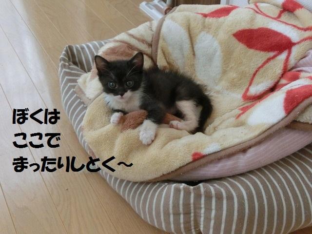 サイちゃん合宿0602 009