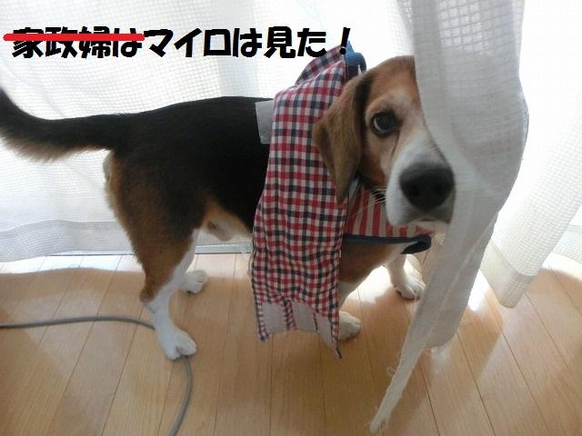 鼻風邪子猫 008