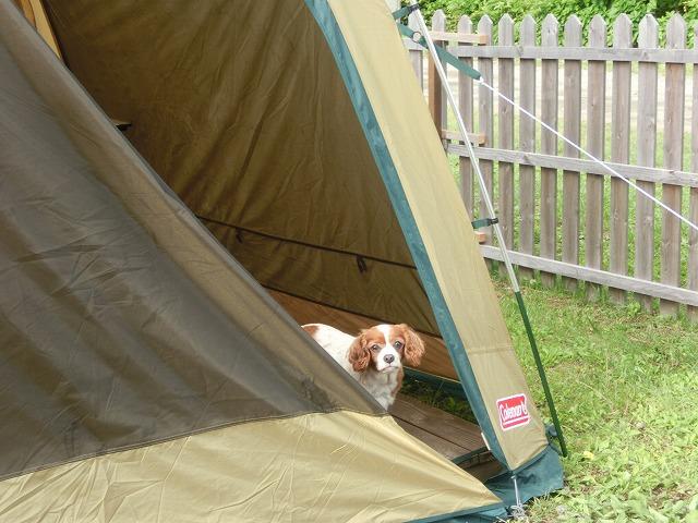 斑尾高原キャンプ場と子猫ちゃん 019