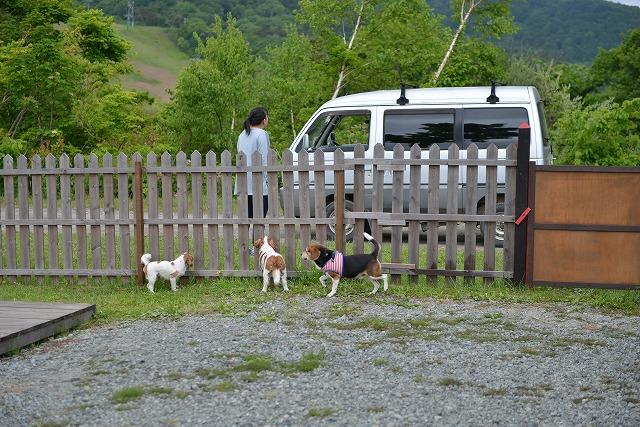 斑尾高原キャンプ場と子猫ちゃん 070
