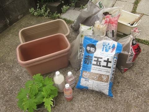 2016年ゴーヤの苗をコンテナに植えました