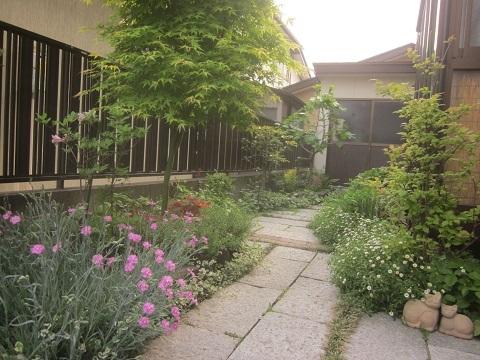 春のお庭・花の通路・宿根草