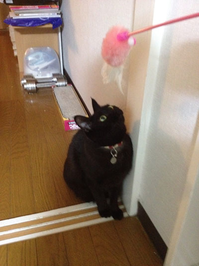 黒猫 狙っている