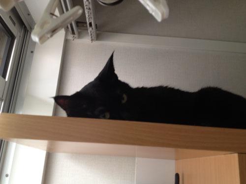 黒猫 寝る