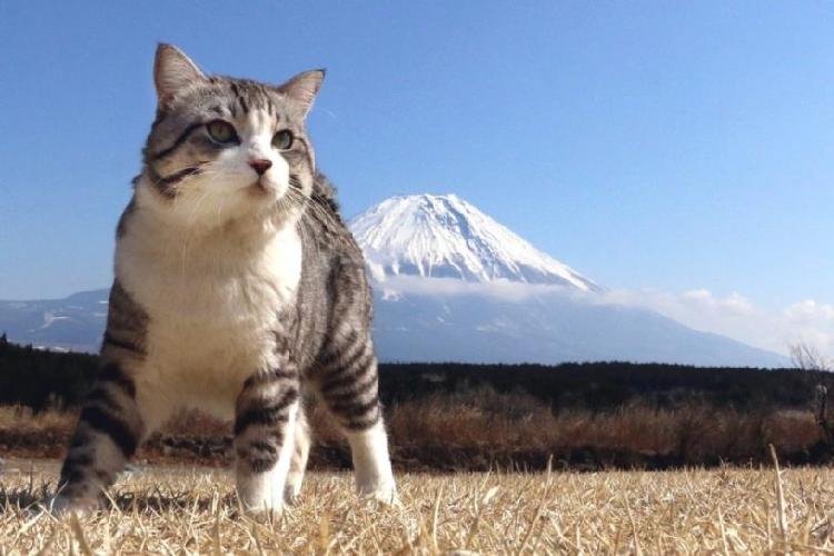 猫  凛々しい