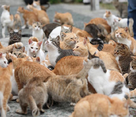 猫 いっぱい