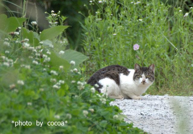 DSC_0011 2011-05-31 13-45-033