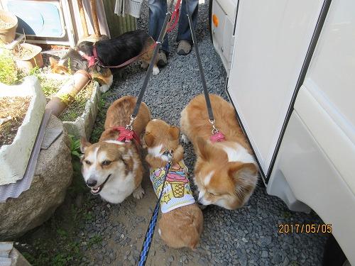 お散歩三姉妹とないと