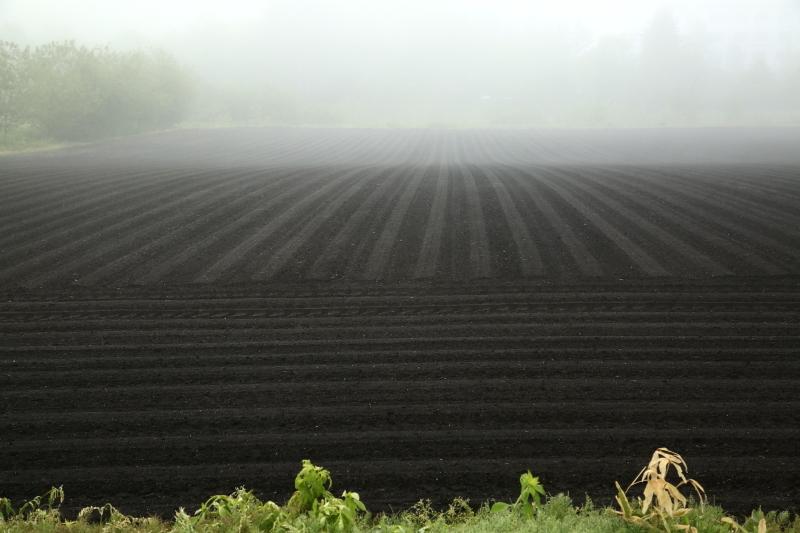 005 濃霧の中で0001