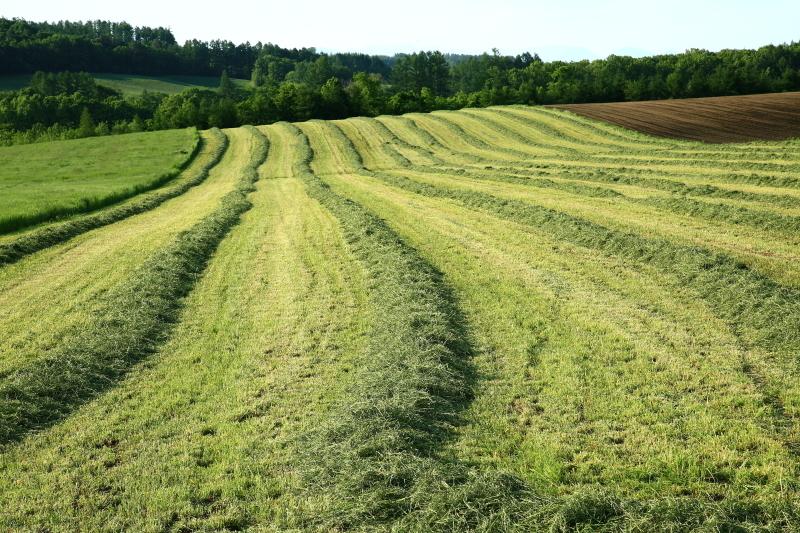 016 草刈り0001