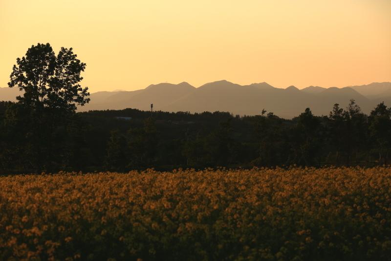 103 ひまわり畑の夕景0001