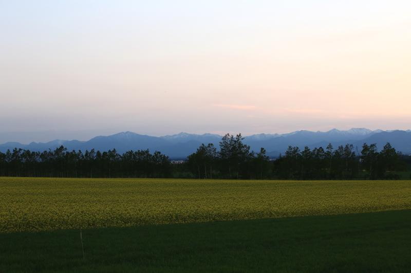 107 ひまわり畑の夕景0001